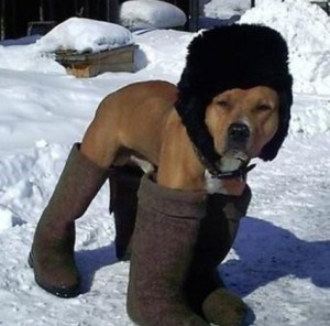 Not this kind of dog boot...